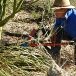 Injecting herbicide directly into trunk
